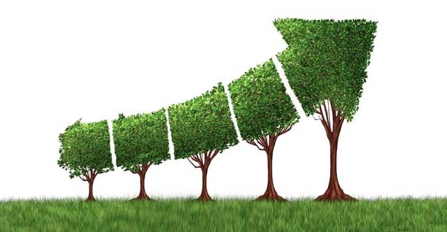 Green Tree Growth